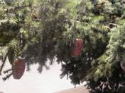Mariann Imre: Pinetree Decorative  (Heart sparklers)