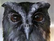 Owl, Snowy owl, Rabbit (series)