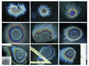 Oildrop nebulas 1-9. (2009)