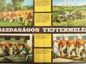 Economical Milk Producing - placard