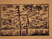 Dry Black Pine