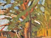 Wattle in the Garden of Painter
