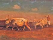 Arable oxen