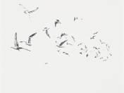 Seagulls (2012)