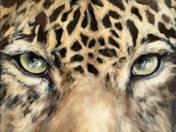 Ágnes Verebics: Panther