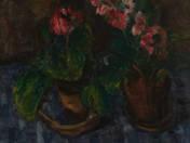 Still Life with Primula